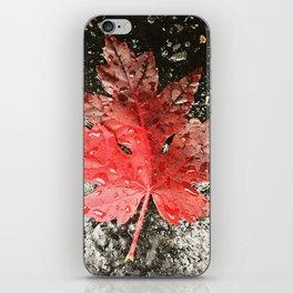 Fall in Asheville iPhone Skin