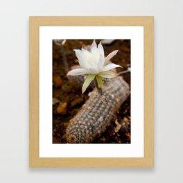 Flower Cactus  Framed Art Print