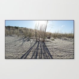 Tussock Grass, Great Barrier Island Canvas Print