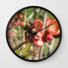 HARDWORKING BUMBLEBEE ON A QUINCE FLOWER Wall Clock