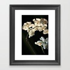 Orchid flowers Framed Art Print