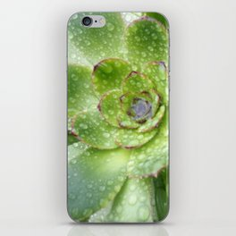 Succulent Rain Drops iPhone Skin