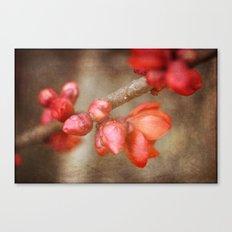 Chaenomeles buds Canvas Print
