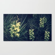 Anything but Yucca Canvas Print