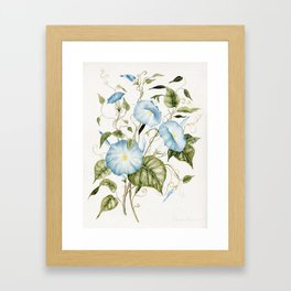 Morning Glories Framed Art Print