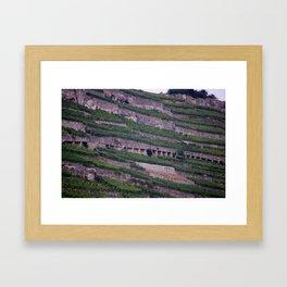 Vineyards 2 Framed Art Print