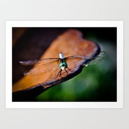 Dragonfly....smile Art Print