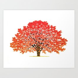 Japanese Maple 1 Art Print