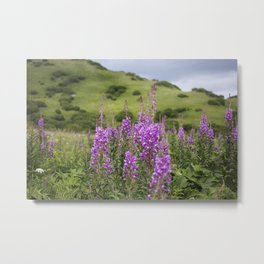 Fireweed on a Mountain Photography Print Metal Print