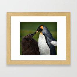 Chick feeding Framed Art Print