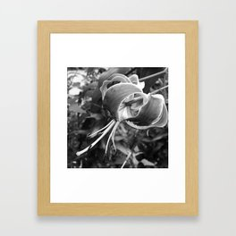 lily lives fully Framed Art Print