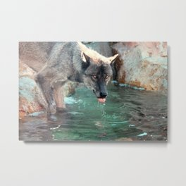 Thirsty Like the Wolf Metal Print