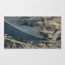 Black Feather Canvas Print