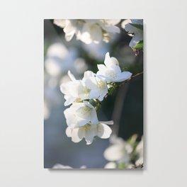 Healing Hawthorn Flowers Metal Print
