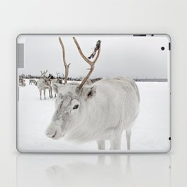 White Reindeer With Antlers In Snow Photo   North Of Norway Lapland Art Print   Travel Photography Laptop & iPad Skin