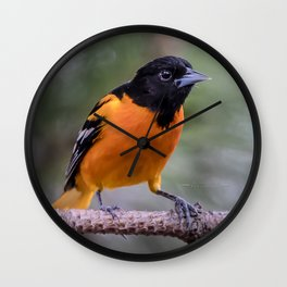 Spring Oriole Wall Clock