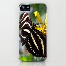 Zebra Longwing Feeding iPhone Case