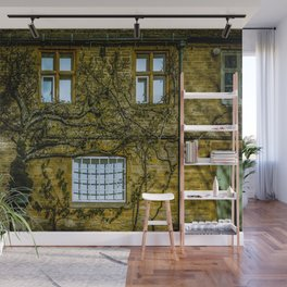 Windows on a Cotswold Square House with Vine and Shadow England Wall Mural