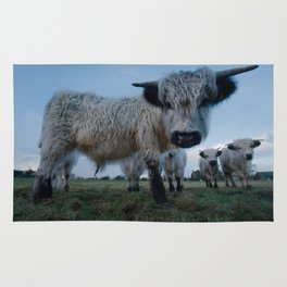 Inquisitive White High Park Cow Rug