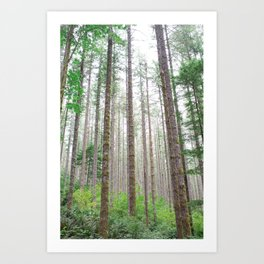 Look up: Forest view. Art Print