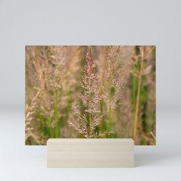 Korean Feather Reed Grass Mini Art Print