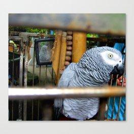 parrot. Canvas Print