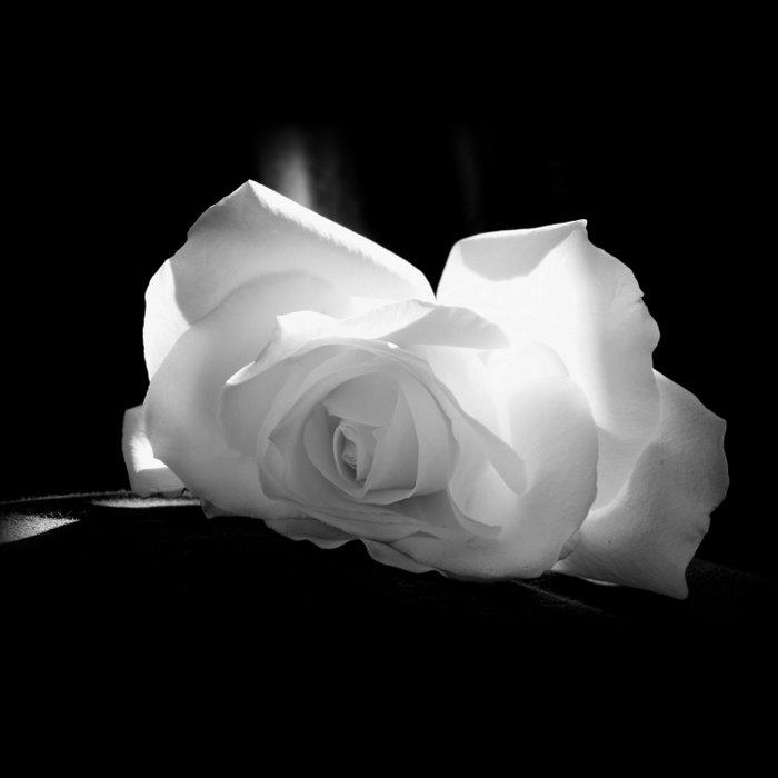 Black & White Rose Duvet Cover