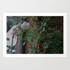 Flowers in Seoul Art Print