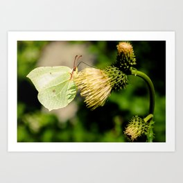 Butterfly or leaf Art Print