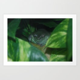 The White's Tree Frog Art Print