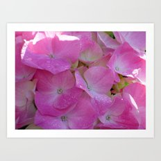 Raindrops on Hydrangeas Art Print
