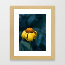 Shy and Scared Framed Art Print