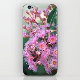 Pink Corymbia Crown iPhone Skin