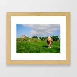 Cows At Cashel Framed Art Print