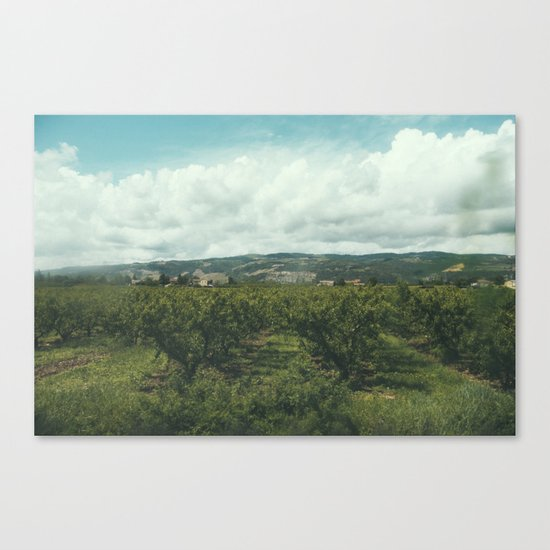 Vineyards, South of France Canvas Print