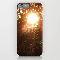 Sunlight before winter iPhone 6s Slim Case