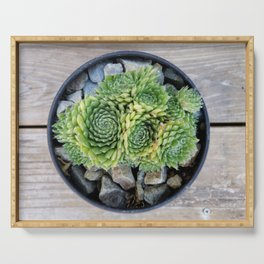 Succulents in a Black Planter Serving Tray