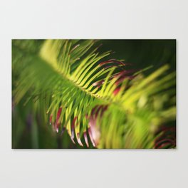Yew needles Canvas Print