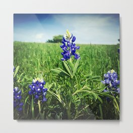 Texas Bluebonnet Flowers Metal Print