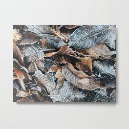 frost Metal Print