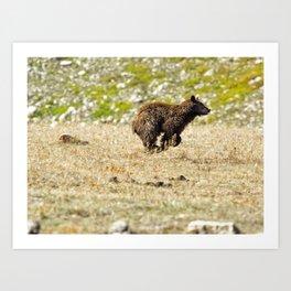 Bear on the Run Art Print