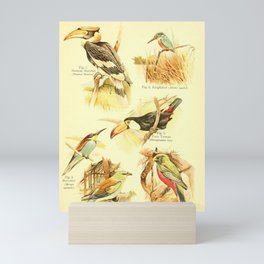 William Playne Pycraft - A Book of Birds (1908) - Plate 19: Hornbills, Bee-eaters and Toucans Mini Art Print
