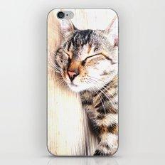 Sleeping Cat iPhone & iPod Skin
