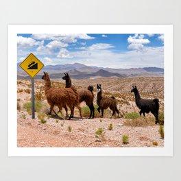 Downhill Llamas Art Print