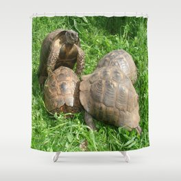 Bullied into Submission - Mating Tortoises Shower Curtain