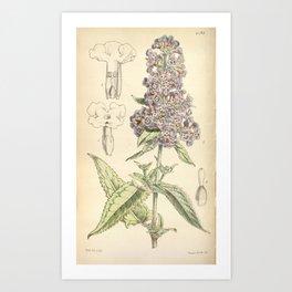 Flower 4793 buddleia crispa Crisped leaved Buddleia1 Art Print