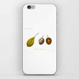 Furst's Fruhzwetsche (Plum) Illustration iPhone Skin