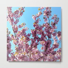 spring pink  blossoms Metal Print