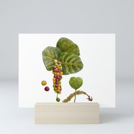 Sea Grape Hawaii Botanical Mini Art Print