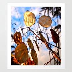 Autumn money plant Art Print